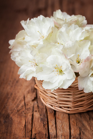 cherry hardwood: White  flowering cherry in a basket in vintage style