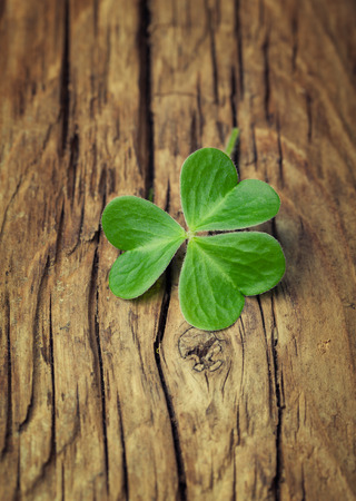 lucky clover: One lucky clover on a vintage wood background
