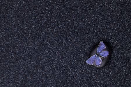 A blue butterfly in a zen garden with a black sand Stock Photo