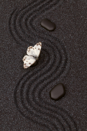 Butterfly in a zen garden with wave lines in the black grain sand