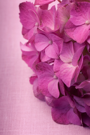 mothersday: Close up of hortensia flowers