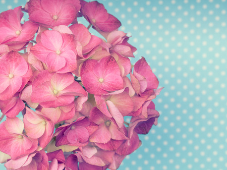 mothersday: Hot pink hortensia flower on a blue polka dot background