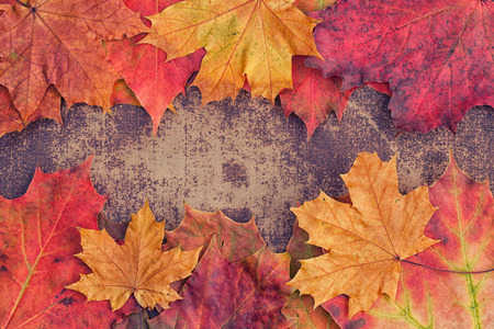 Bright autumn leaves arranged in a frame on a shabby chic background Stockfoto