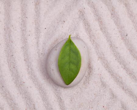 zen stone: Bright green leaf on a zen white garden Stock Photo