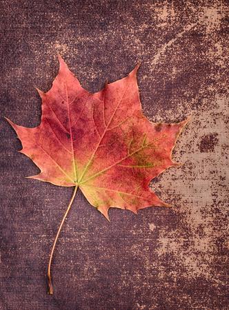 hojas antiguas: Hoja del oto�o en una textura shabby chic Foto de archivo