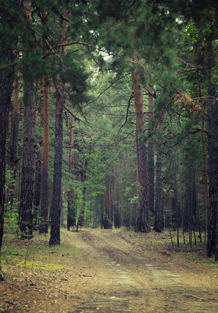 mystical forest: An old curved dirt road in the middle of a mystical forest