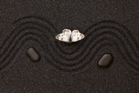 sand: White butterfly in zen garden with wave lines in the black grain sand