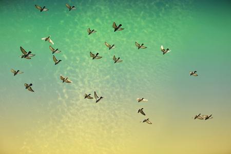 palomas volando: Un cielo de Irlanda colorido con las palomas volando en el aire Foto de archivo