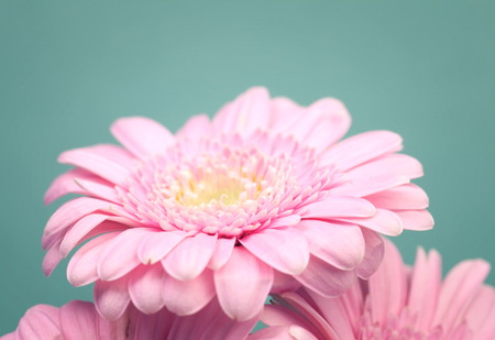 minty: Pink summer flowers on trendy minty background
