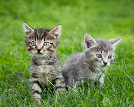 Two curious kittens with expression eyes sitting outside and looking around Stock Photo