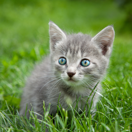 A sweet young kitten with beautifull colored eyes sitting outside