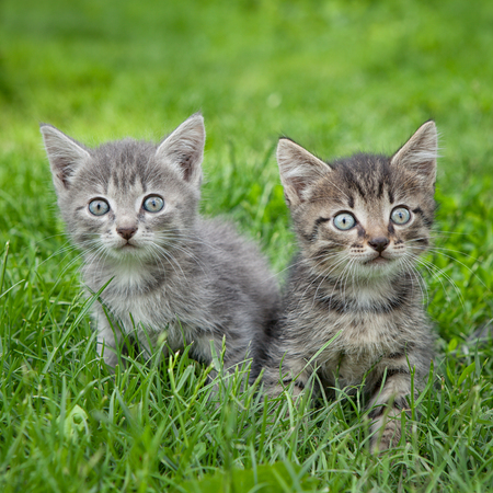 Two adorable little kittens sitting in the grass and looking at the camera