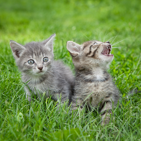 Two cute kittens sitting together in the grass Stock Photo