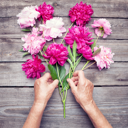 hand lay: Womans hand making a bouquet of red and pink  peony flowers. Top view. Flat lay Stock Photo