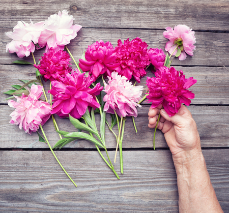 hand lay: Top view. Flat lay. Womans hand making an arrangement of red and pink  peony flowers