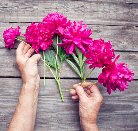 plant hand: Top view of  womans hand making a bouquet of red peony flowers. Flat lay