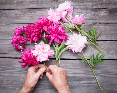 hand lay: Top view of  womans hand making a bouquet of red and pink peony flowers. Flat lay