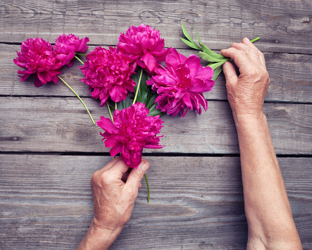 hand lay: Flat lay. Top view of elderly womans hand making a bouquet of red peony flowers