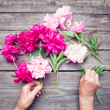 hand lay: Flat lay. Top view of womans hand making a bouquet of red and pink peony flowers