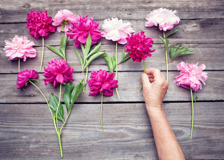 hand lay: Top view. Flat lay of womans hand making an arrangement of red and pink  peony flowers