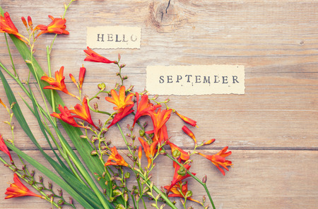 Phrase HELLO SEPTEMBER printed on vintage  paper with  crocosmia flowers on an old wooden surface