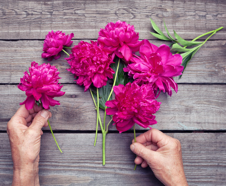 hand lay: Top view of elderly womans hand making a bouquet of red peony flowers. Flat lay Stock Photo