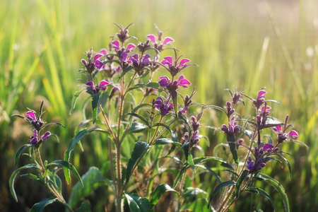 A steppe plant