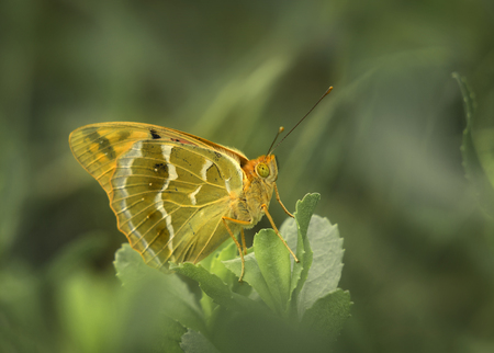 Butterfly with blur background. Stock Photo