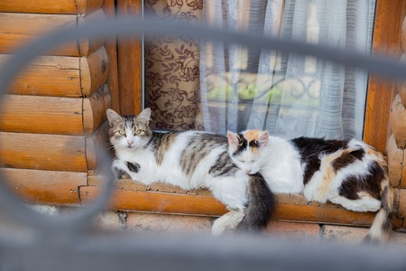 Two cats sleeping on the old wood window sill together 免版税图像
