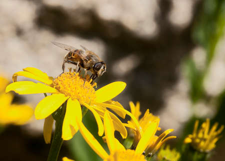 Bee collecting pollen on a flower. Stock Photo