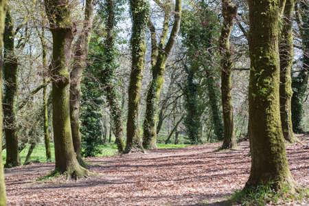 atlantic forest in Santiago of Compostela