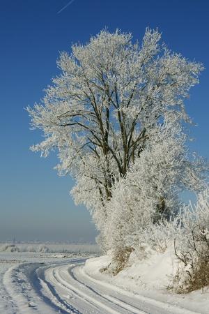 winters: haspengouw in winters