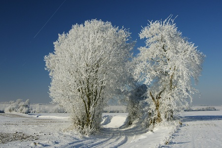 haspengouw winter, belgium Stock Photo - 9689797