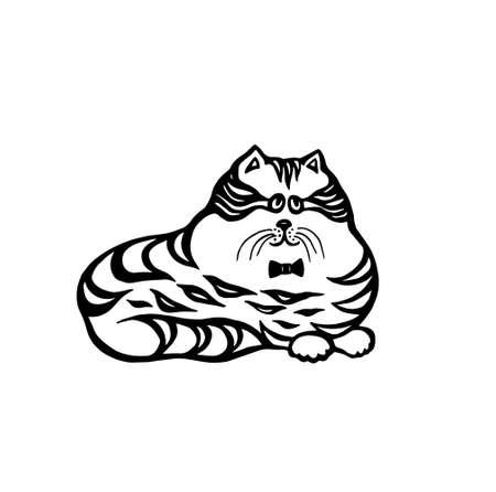 persian cat: big fat cat