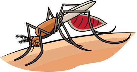 gnat: mosquito Illustration