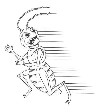 disgusting animal: Black And White cockroach