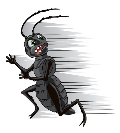 disgusting animal: cockroach