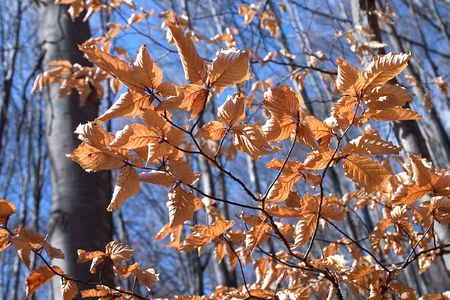 country side: Autumn Brown Leaves on Blue Sky Stock Photo