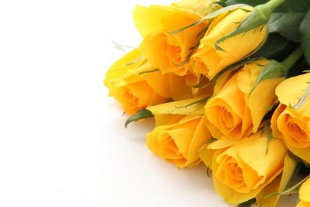 rosas amarillas: Ramo de rosas amarillas sobre fondo blanco