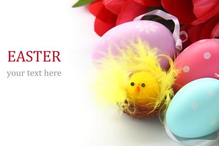 Poco pollo, huevos de pascua de colores y tulipanes de color rosa con el texto de ejemplo