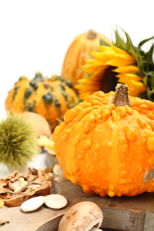 Autumn composition ( pumpkins old wooden board). Thanksgiving day concept photo