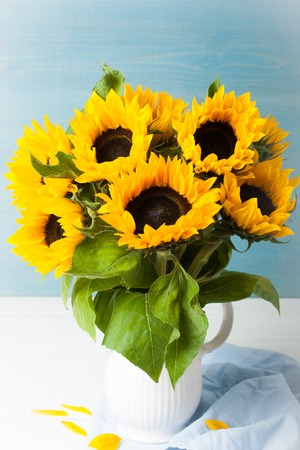 Still life with beautiful sunflowers bouquet in white vase on blue wooden background. Greeting card concept. Stock Photo