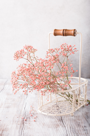 Bunch of pink Gypsophila, Babys-breath flowers, on old white wooden background with copy space. Soft light, selective focus.