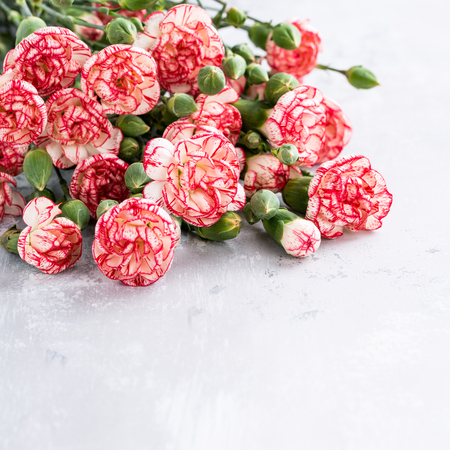 Beautiful pink carnation flowers background for valentine or mother day greeting card. Copy space for text.