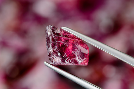 Set of uncut, rough and raw Rhodolite garnets. One held by tweezers.