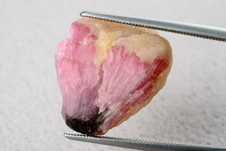 rubellite: Pink uncut, rough and raw tourmaline held by tweezers.