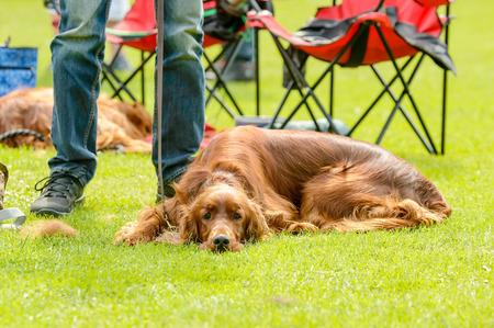 handlers: Big brown dog resting by handlers feet in sunshine.