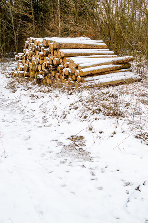 pile of logs: Pile of pine timber logs stacked in winter with snow. Stock Photo