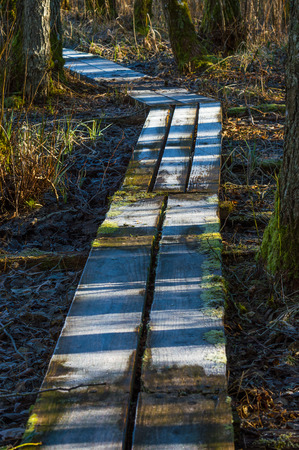 trecking: Footbridge on the ground to help walkers stay dry when crossing wet land. Dark forest floor with contrasting frosty ice.
