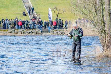 untangle: MORRUM, SWEDEN - MARCH 28, 2015: Unknown person fly fishing for trout or salmon on premiere day. Line has tangled and man tries to untangle it. Standing in water. Spectators in background.